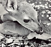 Baby Deer by Megan Vaughan