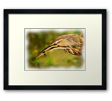 Bittern and Blackfish Framed Print