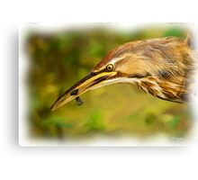Bittern and Blackfish Canvas Print