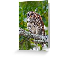Barred Owl Greeting Card