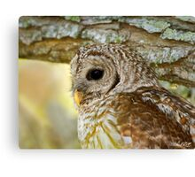 Barred Owl Profile Canvas Print