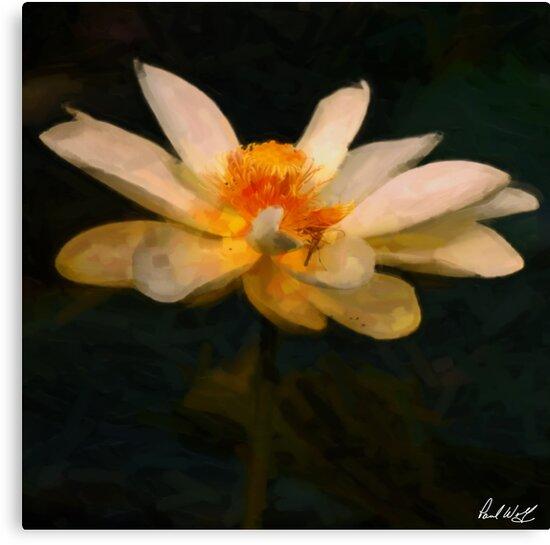 Lotus Flower Oil by Paul Wolf
