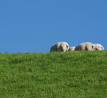 Sheep by Lugburtz