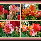 Parrot Tulips in Springtime Philadelphia by MotherNature