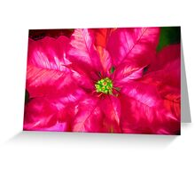 Poinsettia Pink And Red Greeting Card