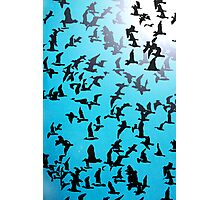 Set of silhouettes of birds on a blue background Photographic Print