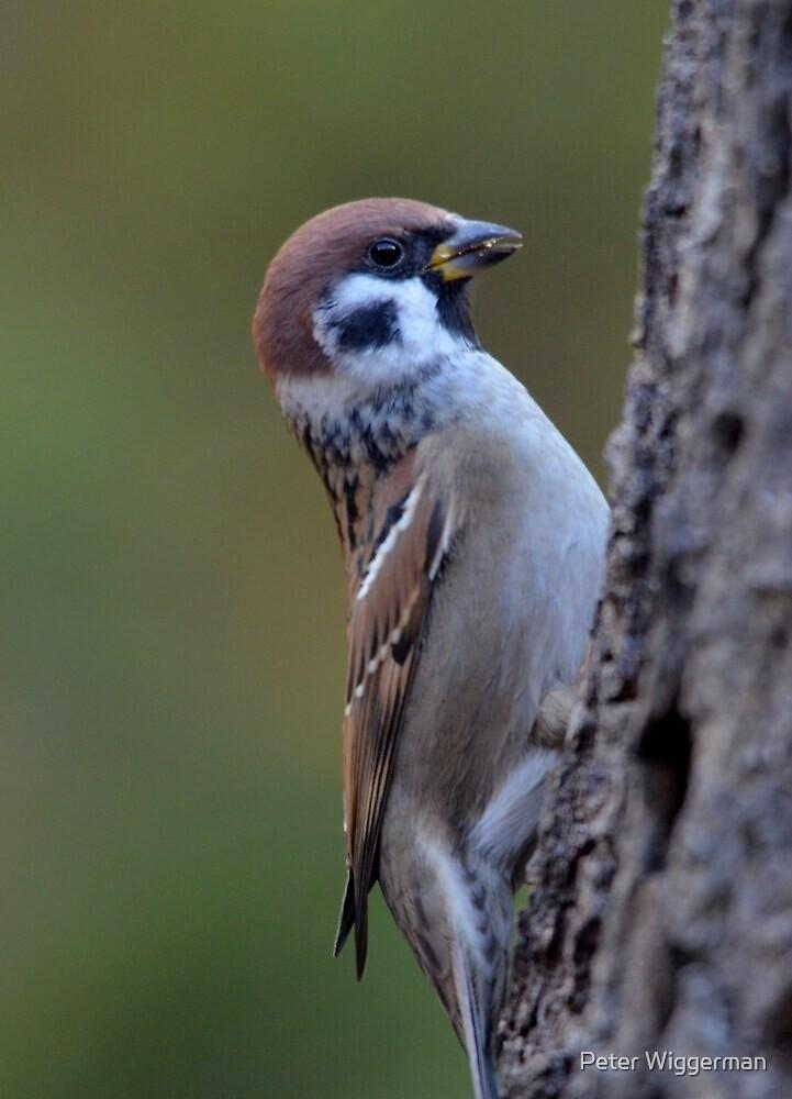 Look.... I am a woodpecker by Peter Wiggerman