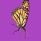 Monarch Butterfly Print On Purple by DreamByDay