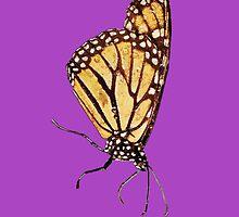 Monarch Butterfly Print On Purple by DreamByDay