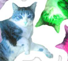 Sansa the Cat, Rainbow  Sticker