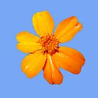 Orange Yellow Flower Print On Blue by DreamByDay