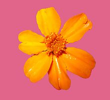 Orange Yellow Flower Print On Pink by DreamByDay