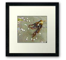 Seaweed And Shells Framed Print