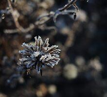 Frozen little star by Themis