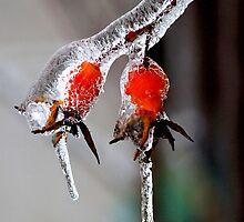 Frozen Berries by Rose Landry