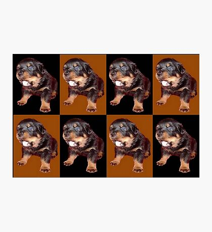 Rottweiler Puppy Isolated On Black and Tan Tile Pattern Photographic Print