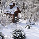 Winter Garden by kkmarais