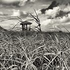 Black and White Meadow by ArtLandscape