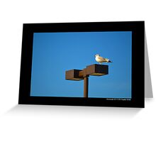 Larus Delawarensis - Ring-Billed Gull On A Stop & Shop Parking Lot Light Pole  Greeting Card