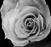Black and white rose. by Dipali S