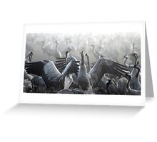 flock of Common crane (Grus grus) Silhouetted at dawn Greeting Card