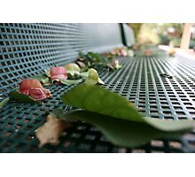 Leaves and Flowers are Falling on a Park Bench in Autumn  Photographic Print