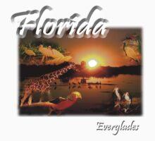 Florida Everglades by jkartlife