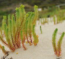 Lowlands Beach, Denmark, Western Australia by Susie  Chan