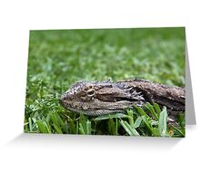 Get off my Turf! Greeting Card