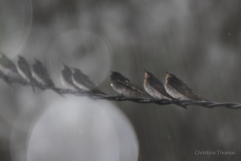 Birds on a Wire by Christina Thomas