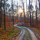 Silver Path in the Woods by vivendulies