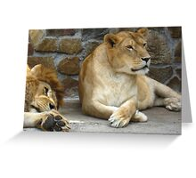 Lion and a lioness have a rest Greeting Card