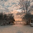 Sunsetting behind a gate in the country by simon17
