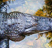 American Alligator. by Nicholas Griffin