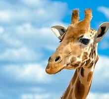 A Giraffes Headshot. by Nicholas Griffin