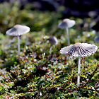 Parasols in the Grass by Helena Bolle