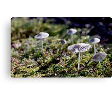 Parasols in the Grass Canvas Print