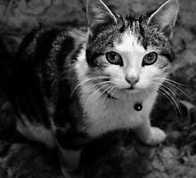 Kittens Gaze by melek0197