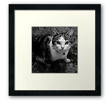 Kittens Gaze Framed Print