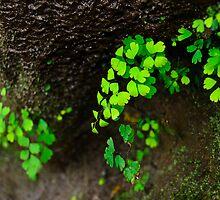 Baby tears fern by raymona pooler