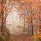 Fog or mist