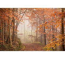 Mystic Woods Photographic Print
