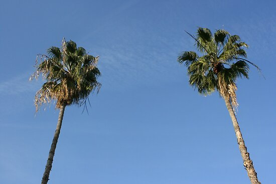 Palm Trees by saschagill