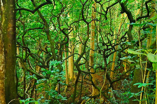 Twisted trees by raymona pooler