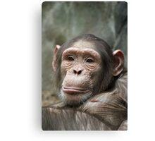 cute chimp Canvas Print
