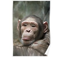 cute chimp Poster