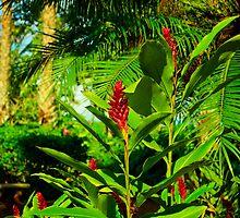 Exotic Ginger by raymona pooler