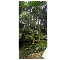 Growth - Cuyahoga Valley National Park, Ohio Poster