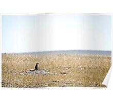 Prairie Dog - Badlands National Park, South Dakota Poster