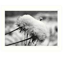 Snowy seed heads Art Print
